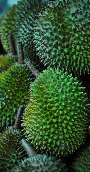 Durian - Singapore's national fruit